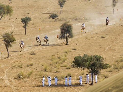 camel racing in the Thar desert